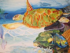 Sea Turtle With Queen Angel